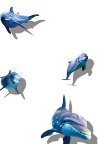 三只海豚免抠素材