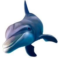 游泳的海豚