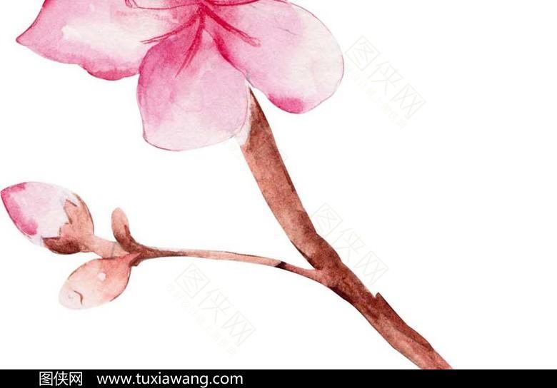 精美手绘素材桃花