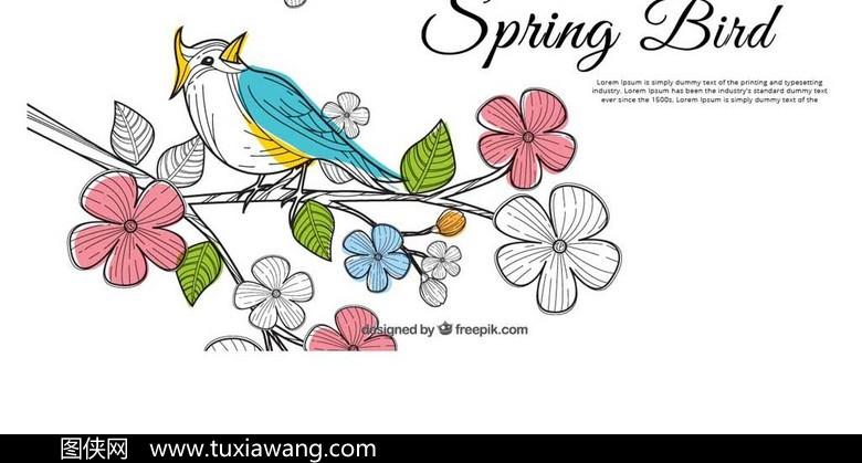 喜鹊 小鸟 动物 矢量喜鹊素材 手绘喜鹊 卡通喜鹊 设计元素