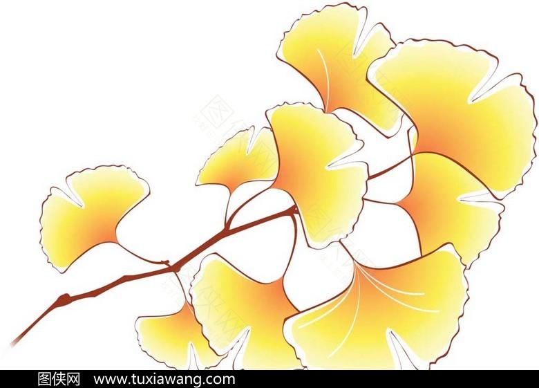 手绘素材秋天的银杏叶png