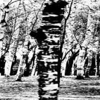 黑白树林装饰画