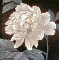 朦胧白花装饰画1