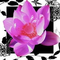 黑白画框花卉装饰画1
