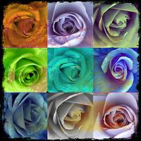 炫彩玫瑰装饰画1