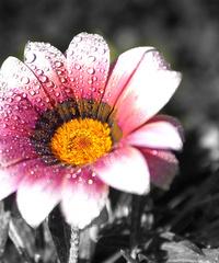 粉白渐变花朵装饰画
