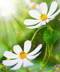 高清绿色花朵装饰画