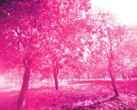 玫红精美大树装饰画