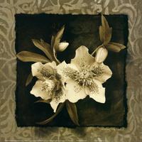 白花装饰画1