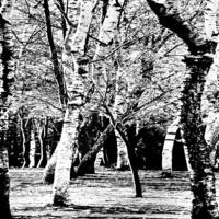 黑白树林装饰画2
