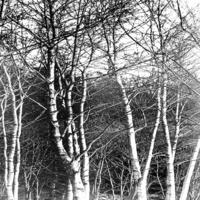 黑白树林装饰画5