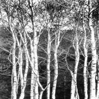 黑白树林装饰画3