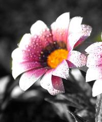 粉白渐变花朵装饰画1