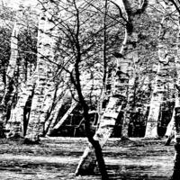 黑白树林装饰画1
