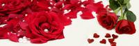 玫瑰花瓣装饰画3