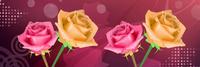 静谧玫瑰装饰画3
