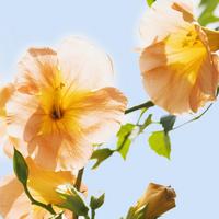 阳光下的花装饰画2