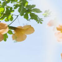 阳光下的花装饰画1