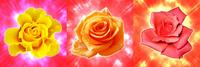 金黄玫瑰装饰画3