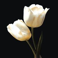 黑底白花装饰画1