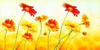 阳光下的小花装饰画