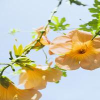 阳光下的花装饰画
