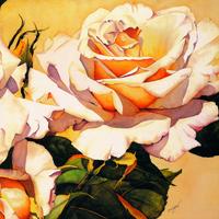 阳光下的玫瑰花装饰画1