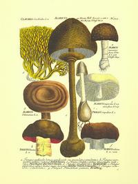 卡通蘑菇客厅装饰画1