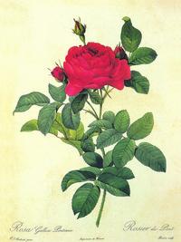手绘红玫瑰花客厅装饰画