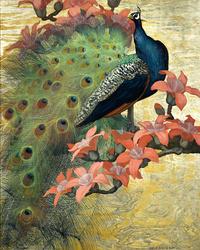 美丽的孔雀鲜花装饰画