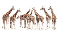 长颈鹿一家装饰画