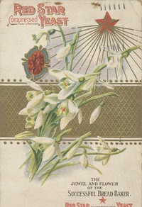美丽白花装饰画素材