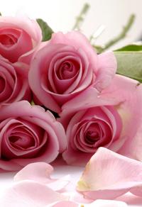 粉色玫瑰客厅装饰画2