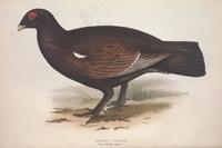 复古棕色小鸟装饰画