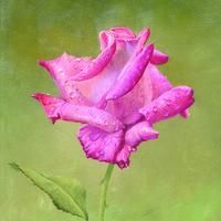 复古玫瑰油画装饰画