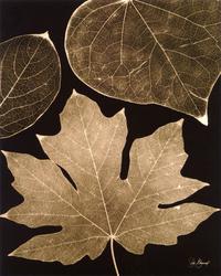 棕色树叶装饰画素材