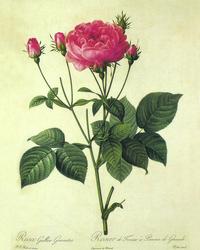 手绘复古玫瑰花客厅装饰画
