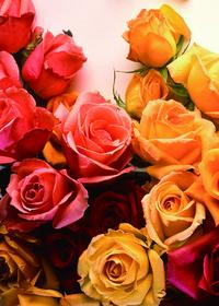 彩色玫瑰装饰画1