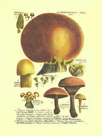 卡通蘑菇客厅装饰画2