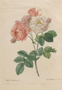 一株粉白鲜花装饰画1