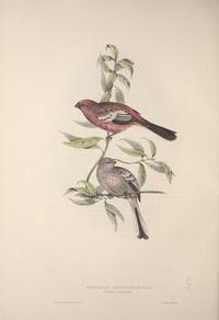 复古红色小鸟装饰画