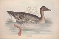 复古划水小鸟装饰画