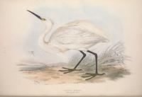 复古白色小鸟装饰画