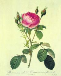复古带刺玫瑰花客厅装饰画