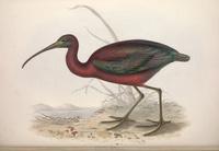 复古红绿小鸟装饰画