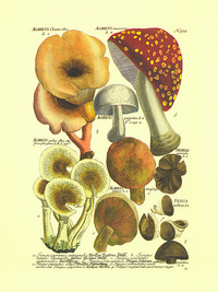 卡通蘑菇客厅装饰画