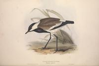 复古棕黑小鸟装饰画