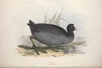 复古黑色小鸟装饰画