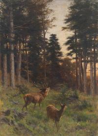 夕阳下的小鹿风景装饰画