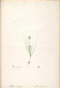 复古精美白花装饰画